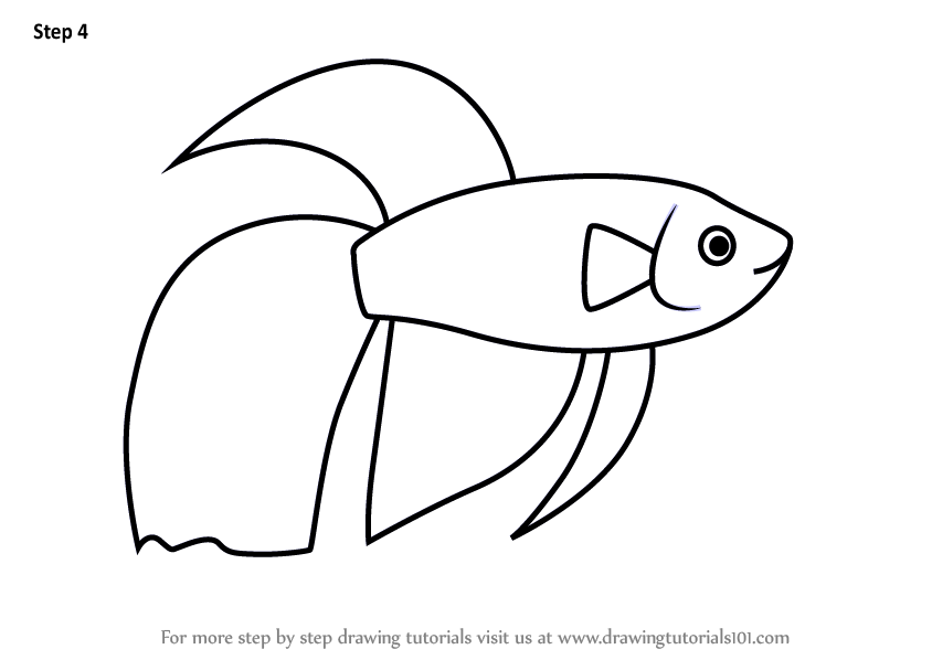 844x598 siamese fighting fish kids learn how to draw a siamese fighting