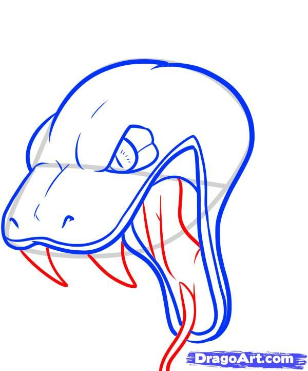 600x722 How To Draw A Snake Head, Draw Snake Heads Step Snake