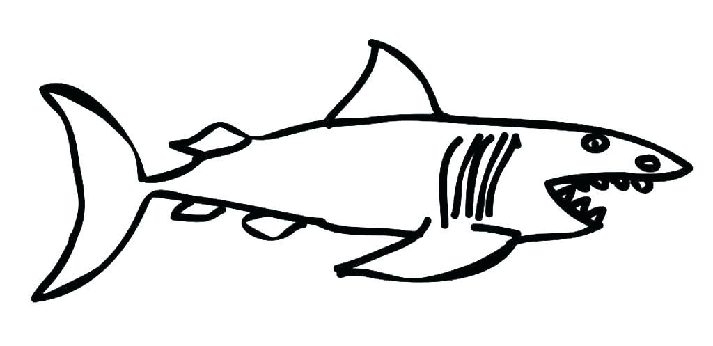 1024x497 bull shark drawing bull shark bull shark line drawing