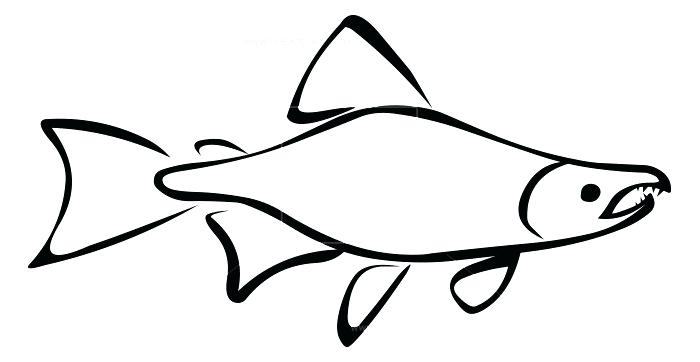 700x362 fish outline pictures fish outline printable library fish tank