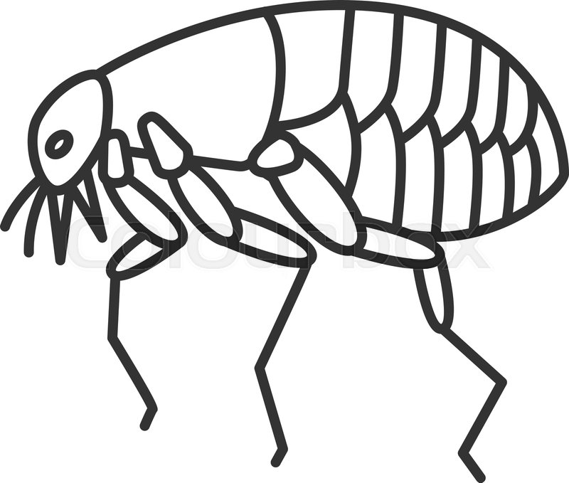 Flea Drawing | Free download best Flea Drawing on ClipArtMag com