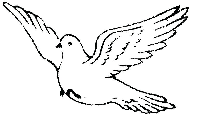 824x472 how to draw doves dove flight drawing doves draw love