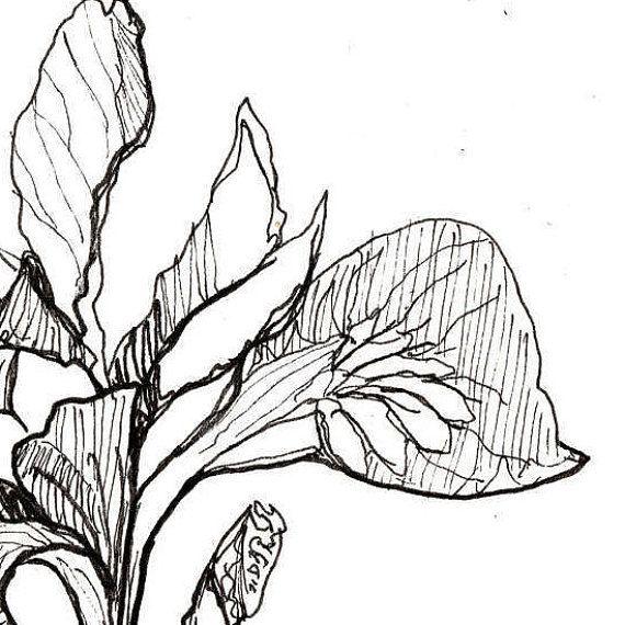 570x570 Iris Print Flower Art Botanical Illustration Wall