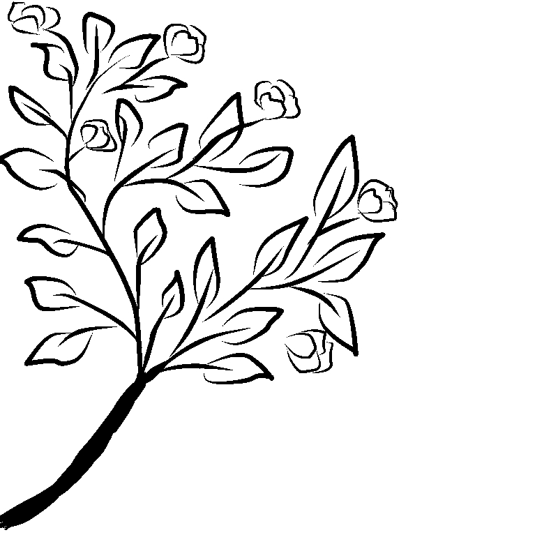 800x800 Line Art Flower Drawing Day Floral Display Anino