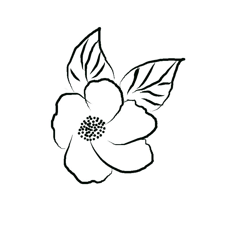 800x800 Line Art Flower Drawing Day Floral Anino