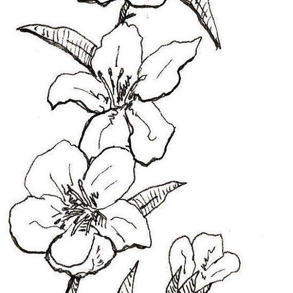 570x570 Peach Blossom Print, Flower Art, Botanical Illustration, Wall Art
