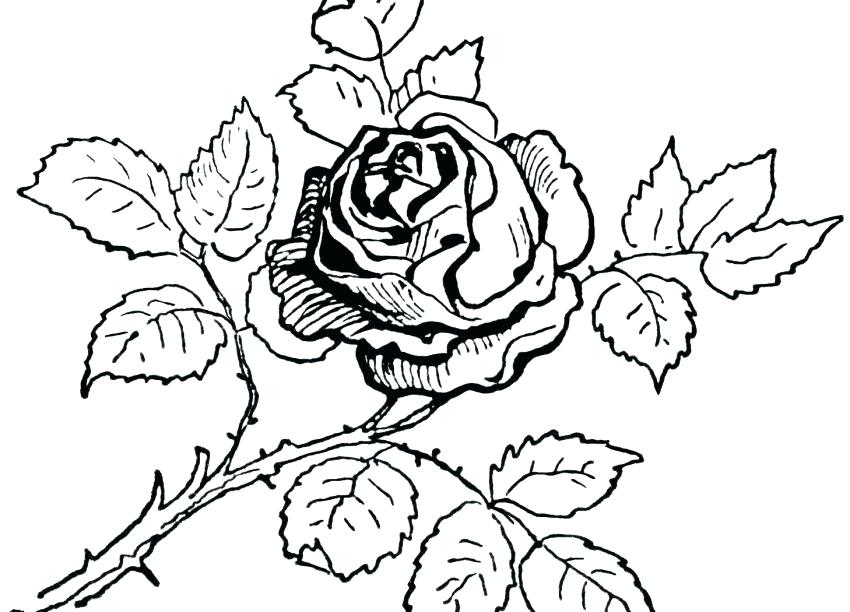 850x612 Rose Coloring Pages To Print Hearts And Roses Coloring Pages Rose