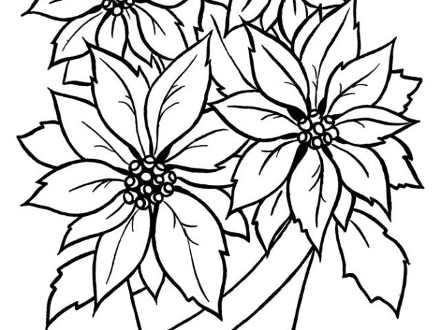 640x480 Drawing Of Flower Basket With Colour Christmas Flower Printable