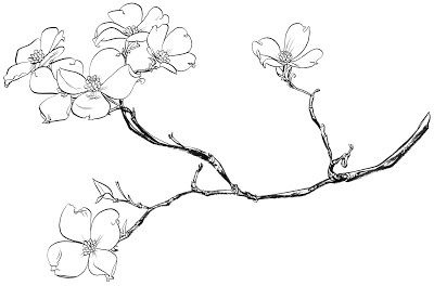 400x264 Dogwood Tree Flower Coloring Pages Sketch Coloring