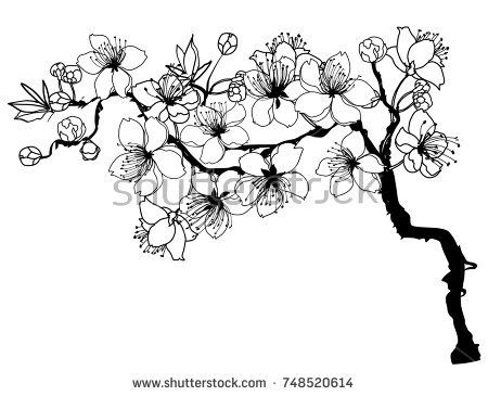 450x365 Hand Drawn And Outline Cherry Branches With Flowers, Sakura Vector
