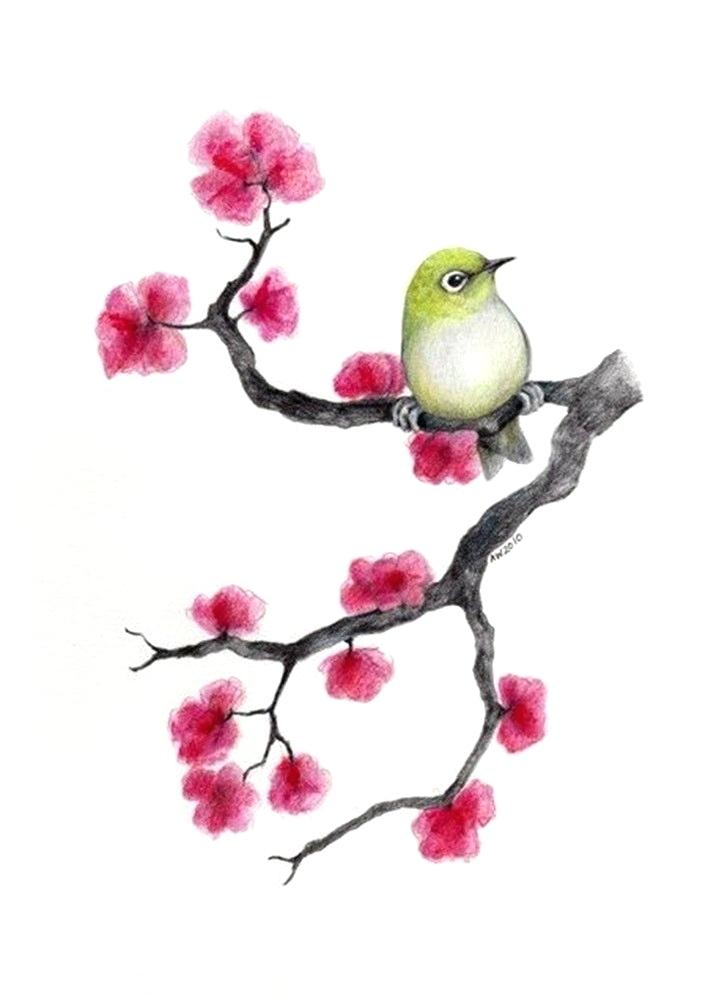 708x999 How To Draw Japanese Cherry Blossoms Branch Of With Flowers Apple