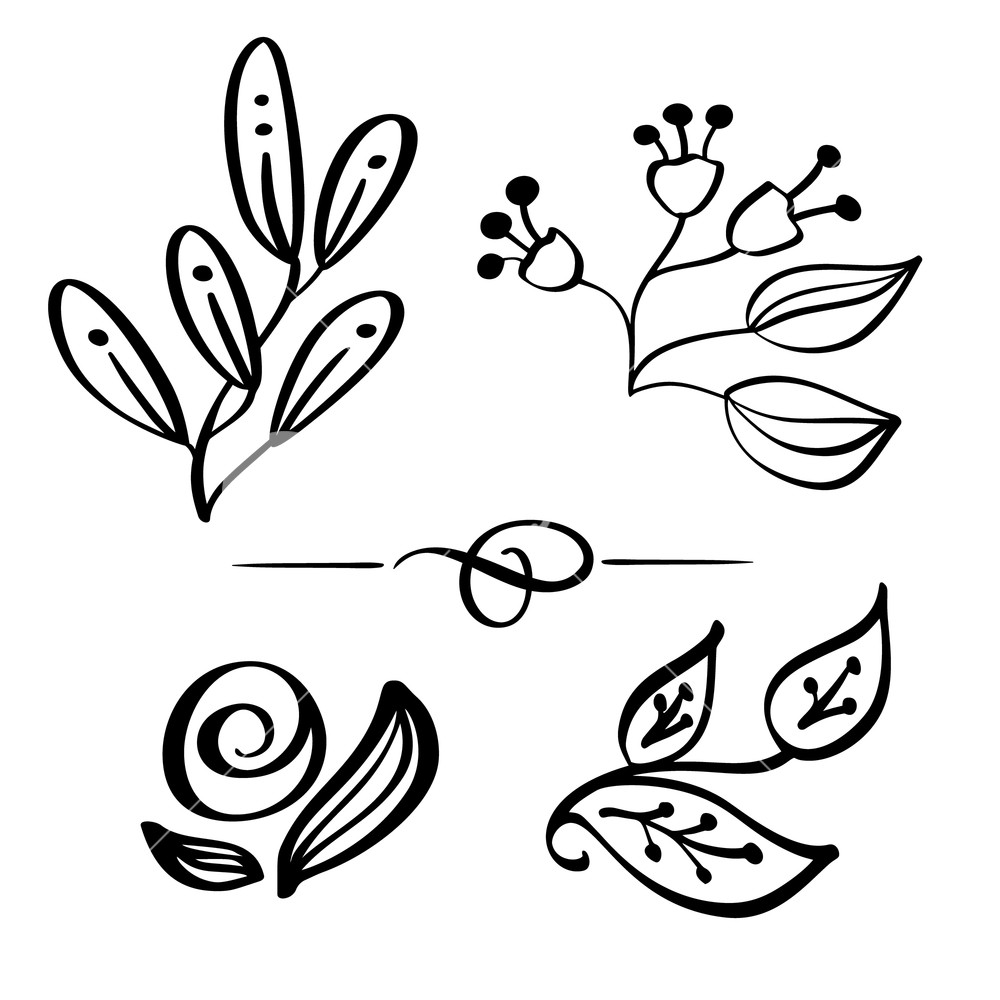 1000x1000 Set Hand Drawn Wild Flowers Branch Vector Drawing And Sketch