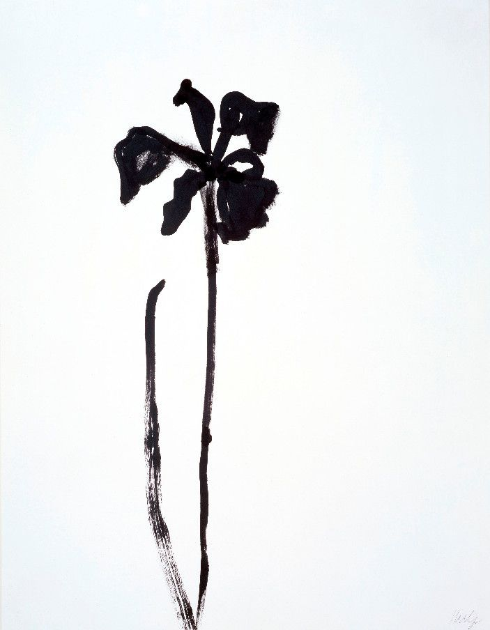 703x904 American Artist Ellsworth Kelly Exhibits His Flower And Plant