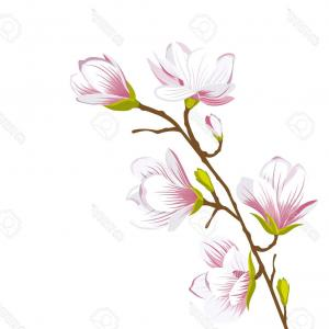 300x300 Wreath Magnolia Flower Drawing And Sketch With Vector Soidergi