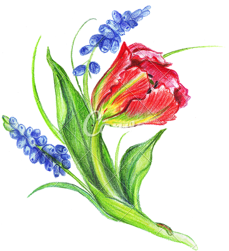 731x800 Hand Drawing Of Colored Bunches Of Flowers