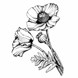 275x275 Black White Line Drawing Flower Buds Photos And Images