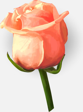 341x462 Drawing Rose Bud Vector Free Vector In Encapsulated Postscript