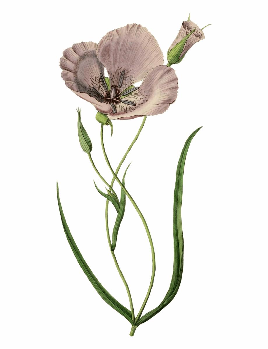 Flower Crown Drawing Tumblr | Free download best Flower