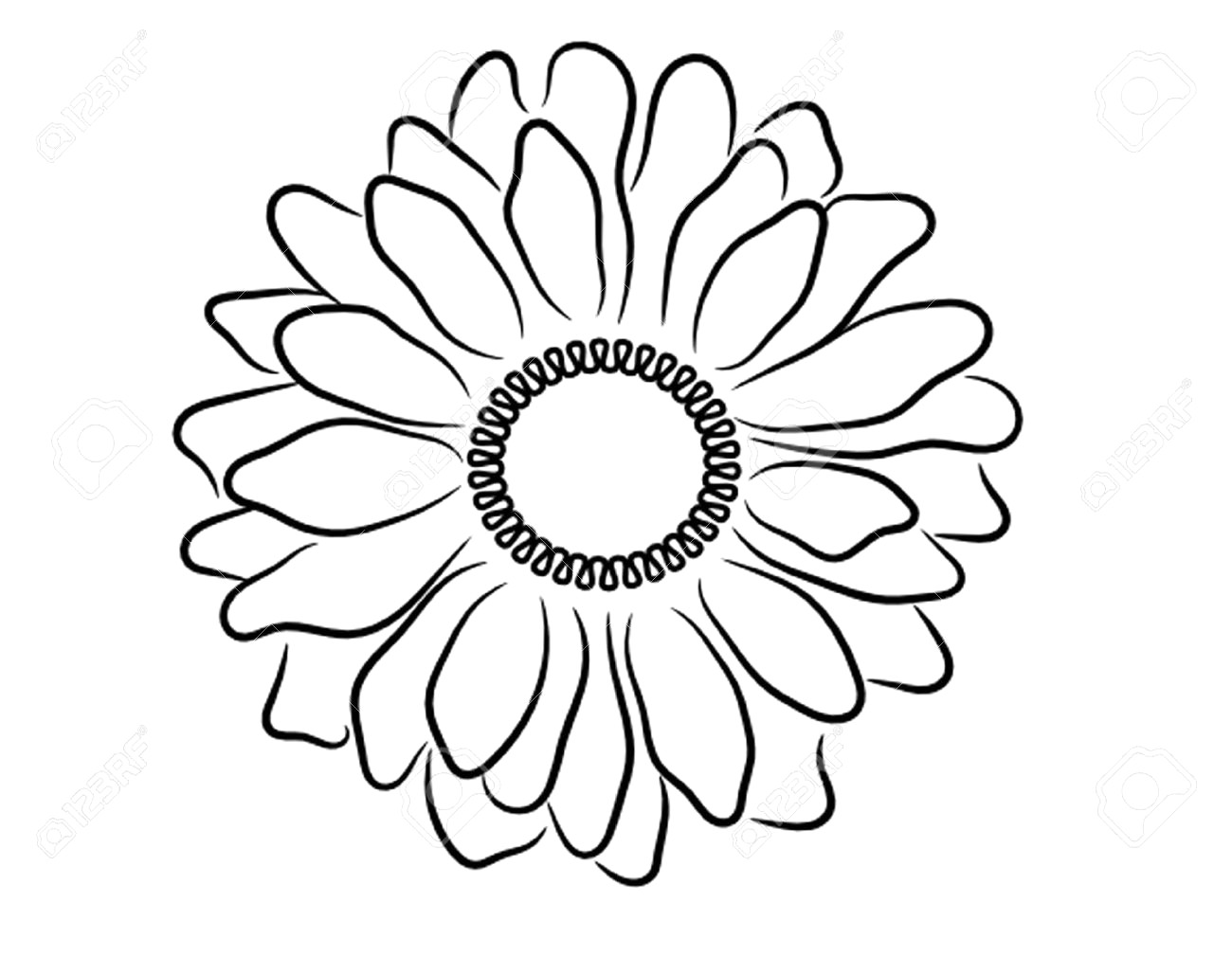 1300x1029 Drawing Of A Daisy Flower Sketch Library Throughout Outline
