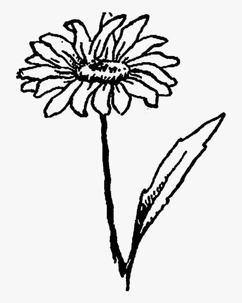 820x1023 Drawn Wildflower Daisy Flower