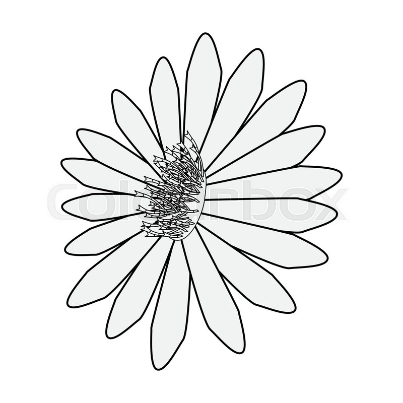 800x800 Flower Daisy On White Background Stock Vector Colourbox