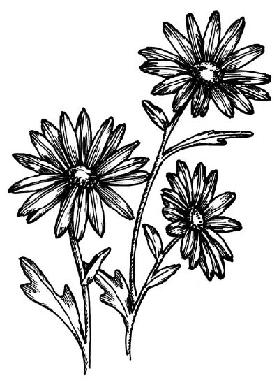 400x551 How To Draw A Daisy Howstuffworks