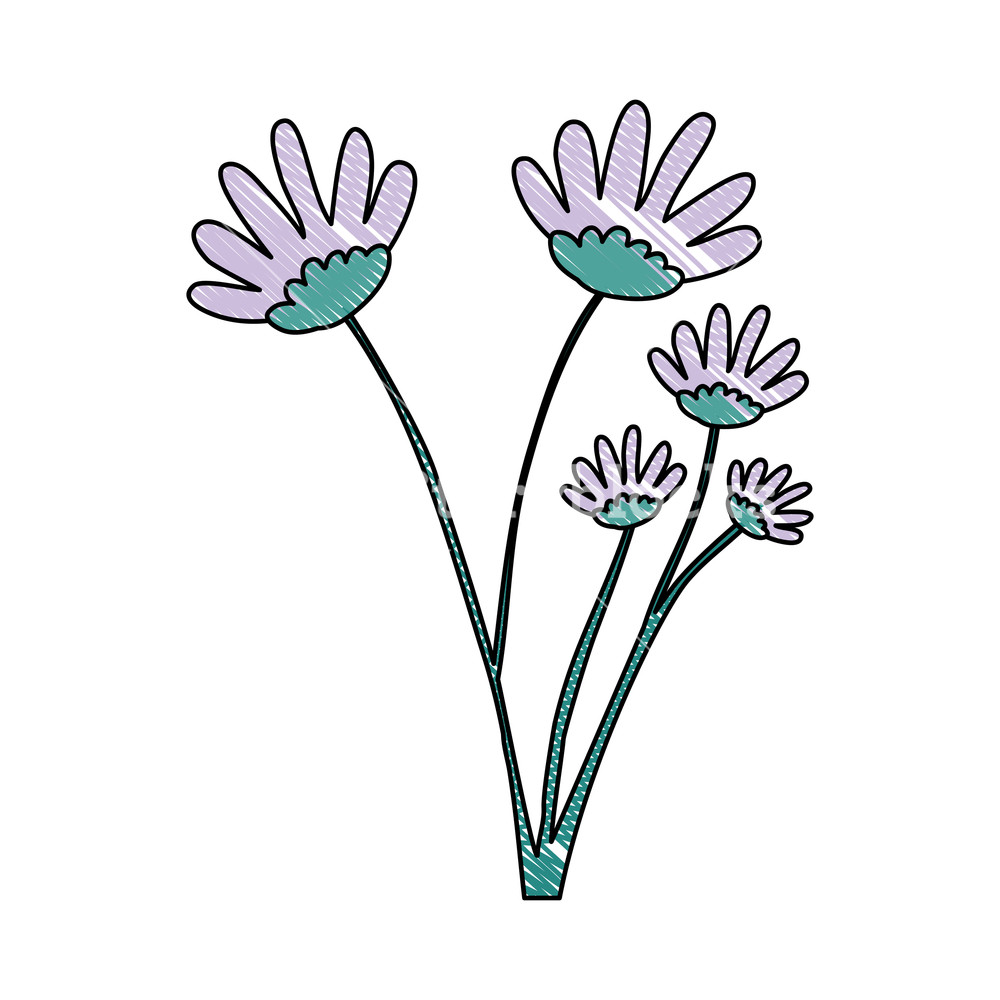 1000x1000 Crayon Silhouette Of Hand Drawing Lilac Color Daisy Flower Bouquet