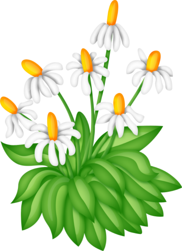 580x800 Collection Of Free Bush Drawing Daisy Flower Download On Ui Ex
