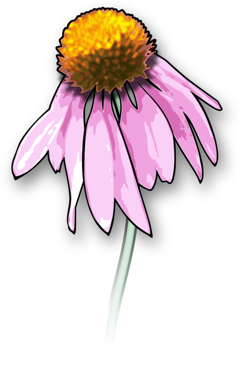 491x750 Collection Of Free Daisy Drawing Dead Flower Download On Ui Ex