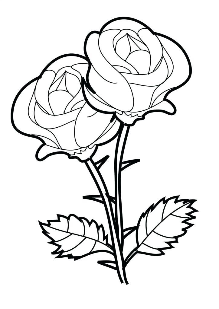 724x1024 Beautiful Flowers Design Drawing