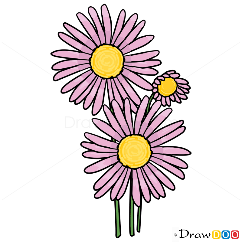 800x800 How To Draw Aster, Flowers