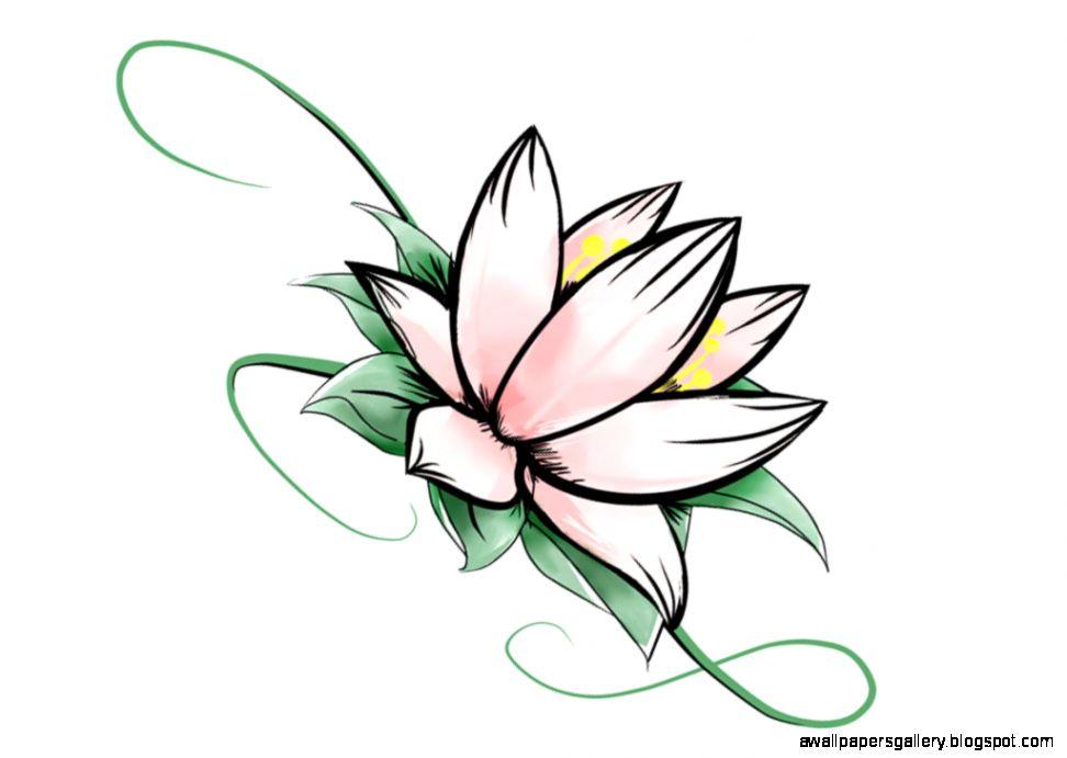 972x691 Simple Lotus Flower Drawing Wallpapers Gallery