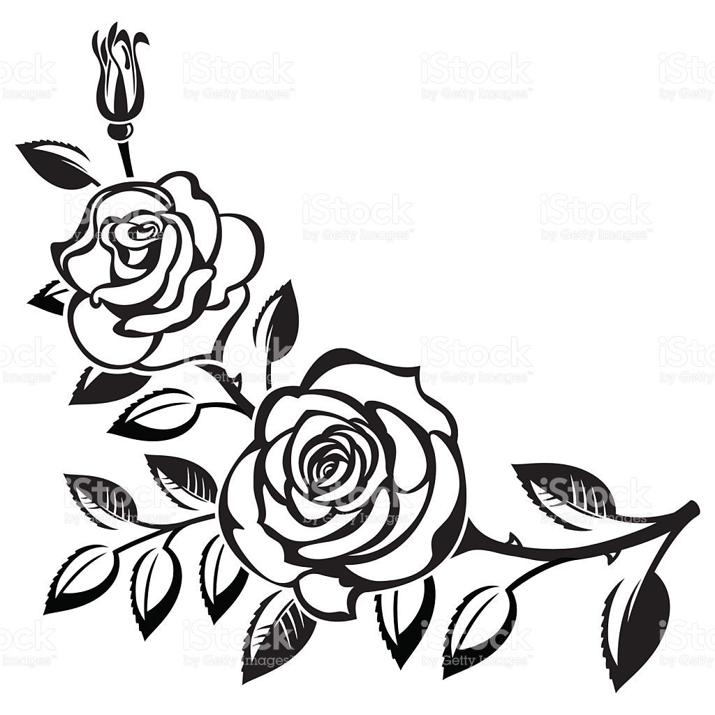 1024x1024 branch of roses on a white background in art background