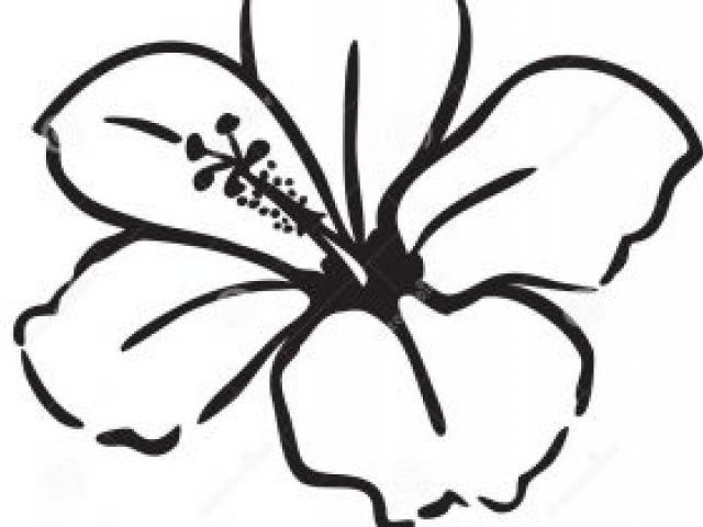 640x480 how to draw a hawaiian flower hawaiian flower clip art clipart