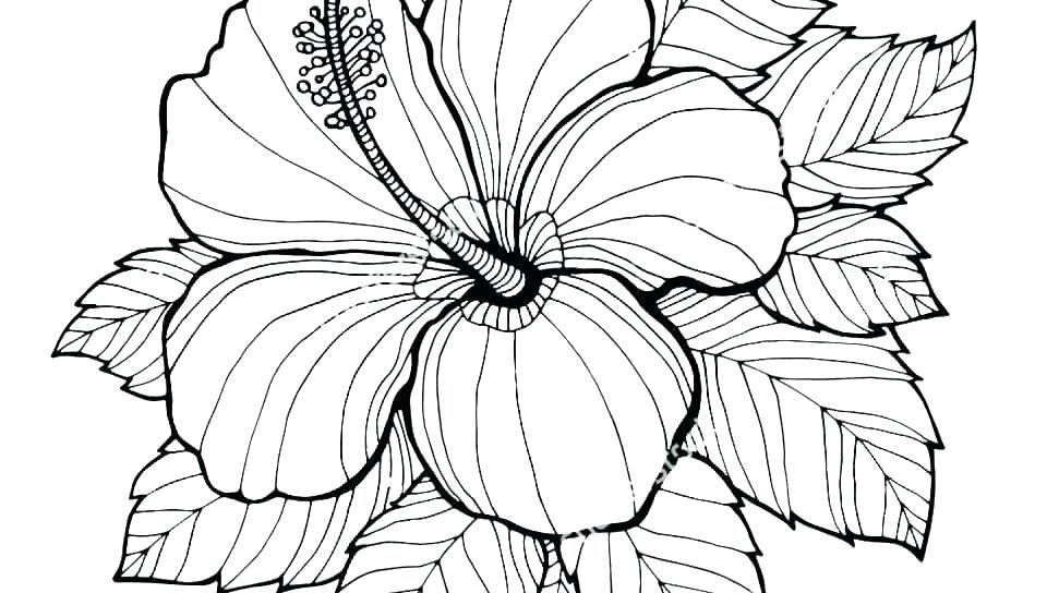 960x544 Childrens Flower Colouring Pages Coloring Blank Rainbow