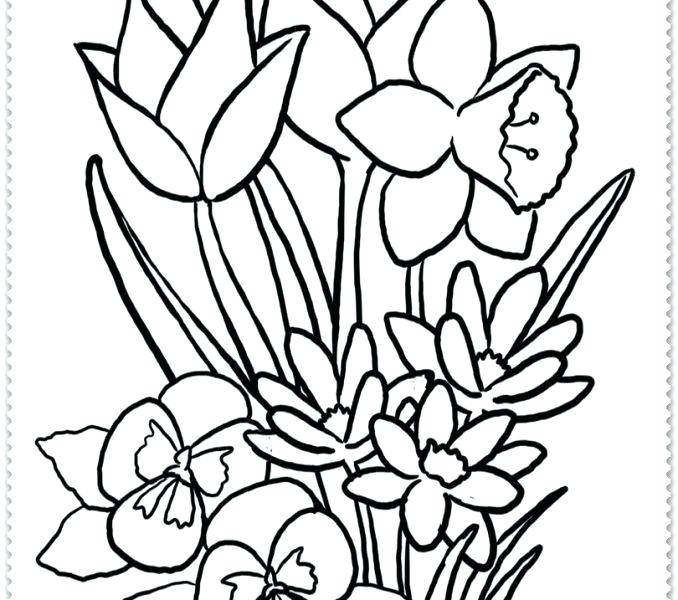 678x600 spring drawings bring spring on paper draw spring flowers step