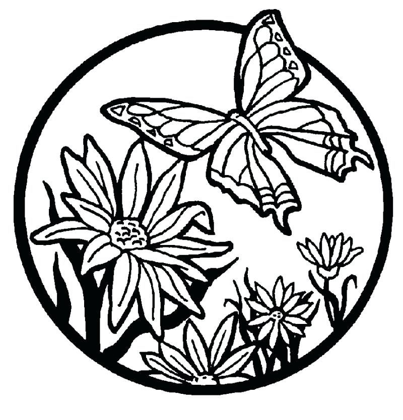 800x835 Free Coloring Pages Flowers Flower Coloring