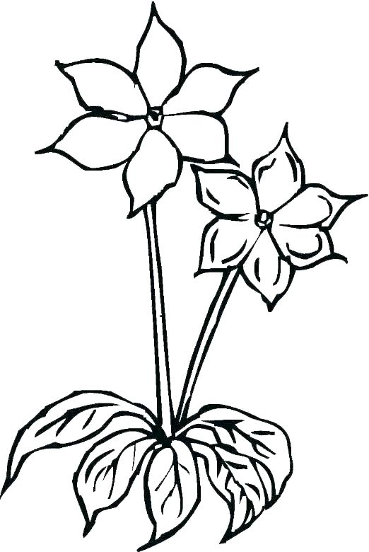 522x780 Huge Collection Of 'drawing Pages Of Flowers' Download More Than