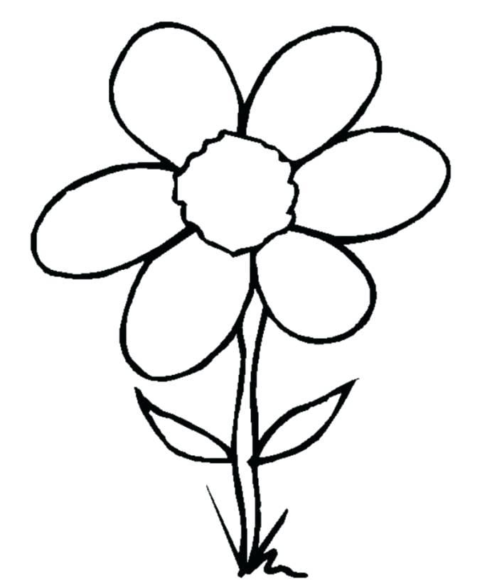 699x828 A Flower Drawing Best Drawing Flower Drawing Simple Colour