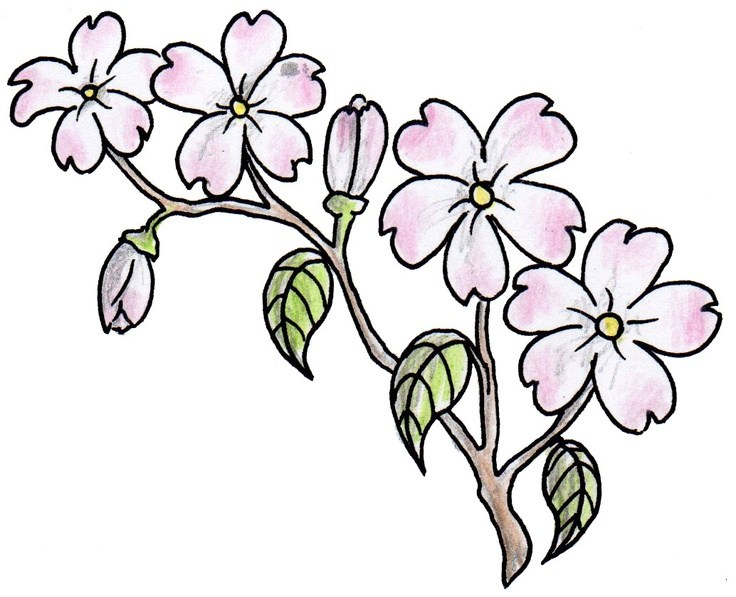 736x597 drawn pink flowers landscape pictures and ideas on pro landscape