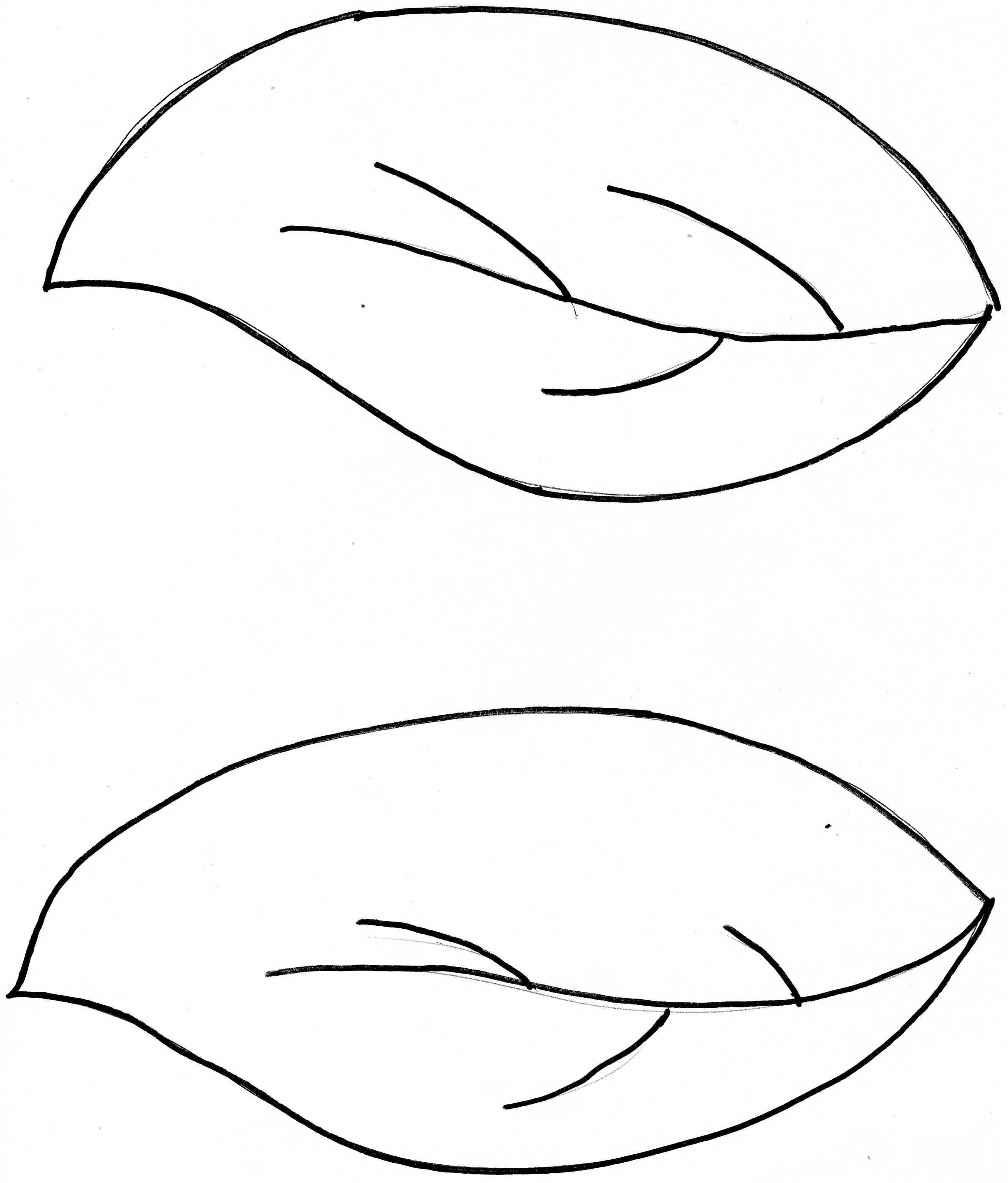 2382x2796 How To Draw Flower Leaves Coloring Pages Image