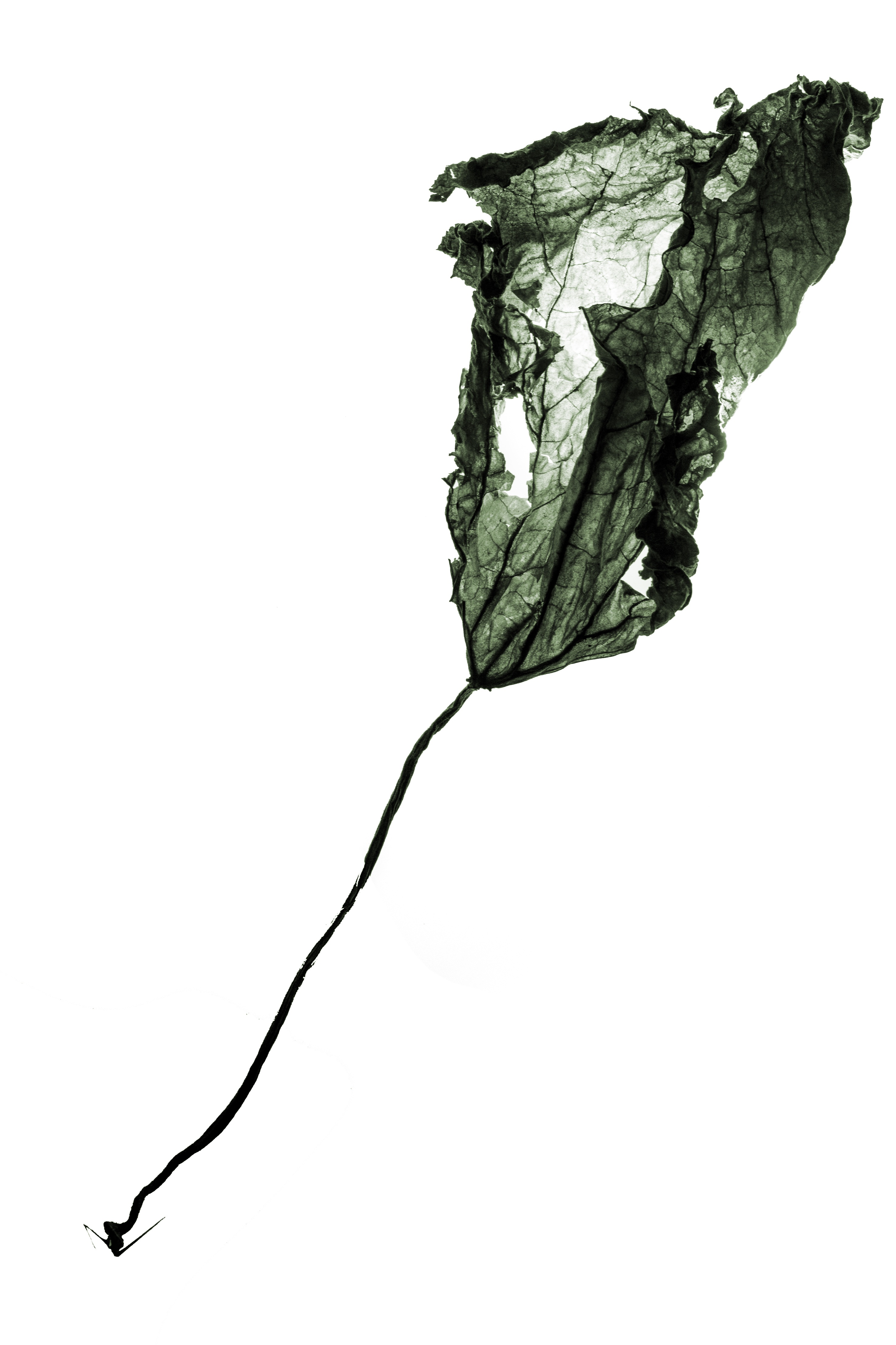 2946x4420 Free Images Branch, Silhouette, Plant, Leaf, Flower, Still Life