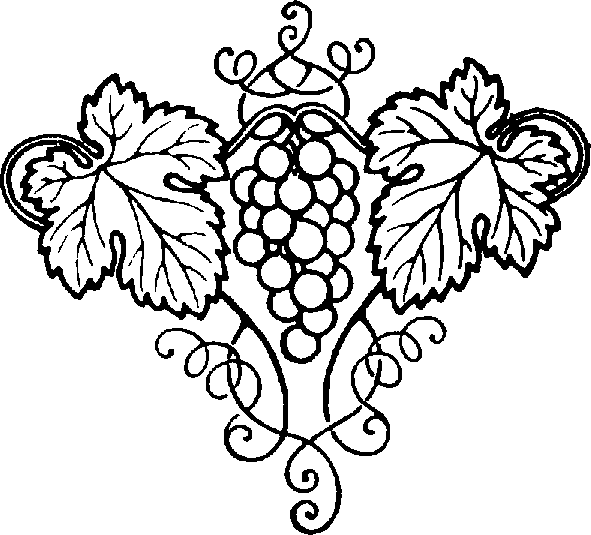 591x535 Grape Vine Drawings