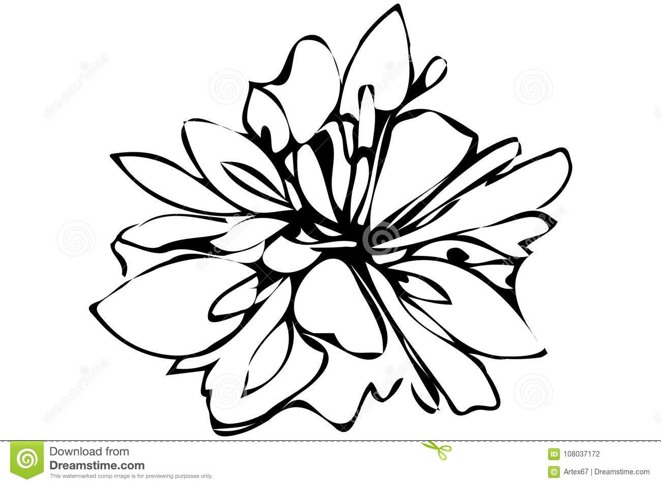1300x957 Abstract Flower Sketch And Vector Sketch Abstract Flower Stock