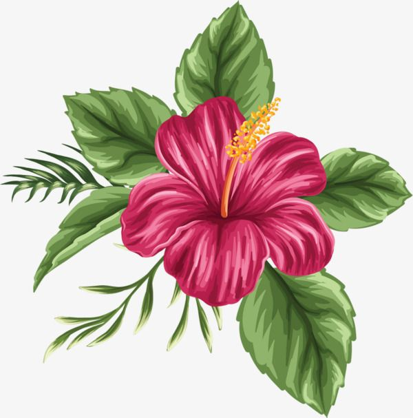 600x607 hand painted hibiscus flower, flower clipart, hibiscus flower