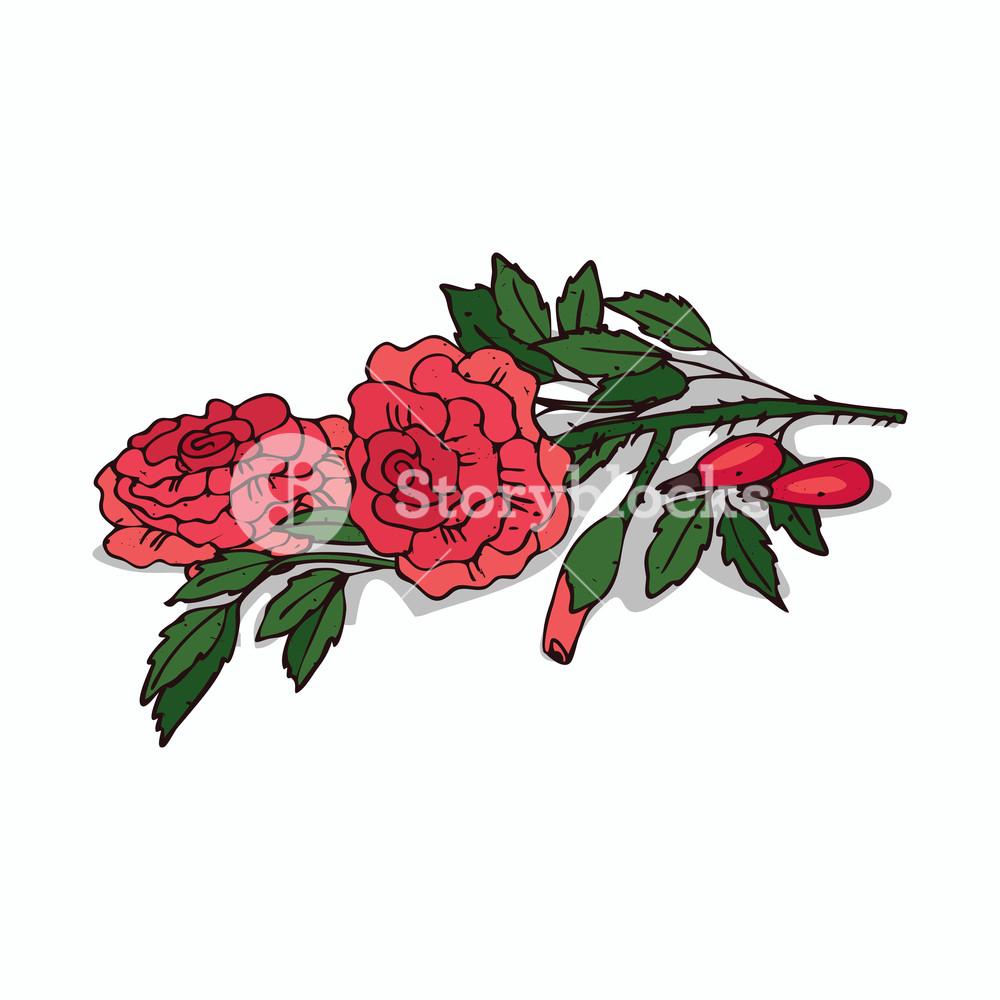 1000x1000 Isolated Clipart Of Plant Rose On White Background Botanical