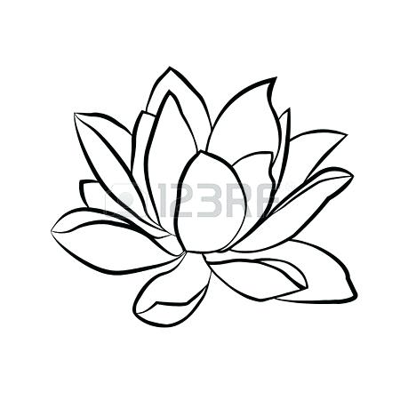 450x450 Lotus Flower Sketch Lotus Flower Sketch