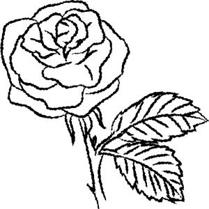 300x300 Peony Flower And Leaves Line Drawing Hand Vector Soidergi