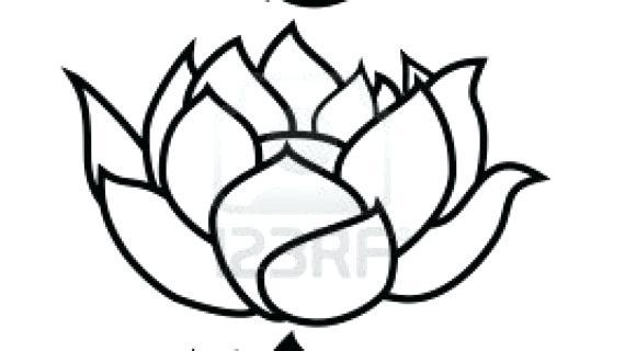 570x320 Drawing Lotus Flower Free Line Drawing Lotus Flower