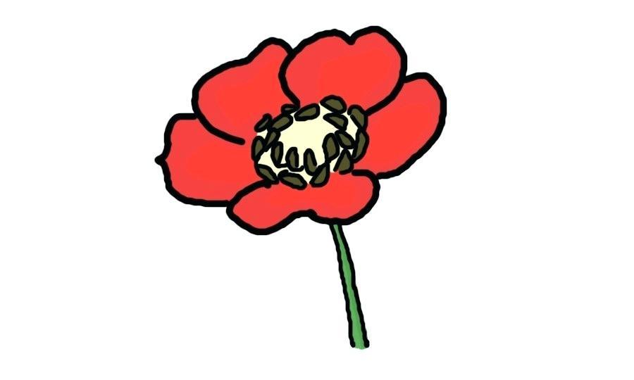 900x540 Poppy Flower Drawings